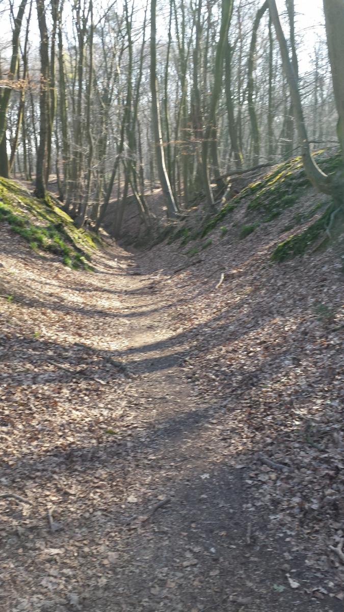 Herfsttocht8-N70-holle-weg-Eversbos.jpg